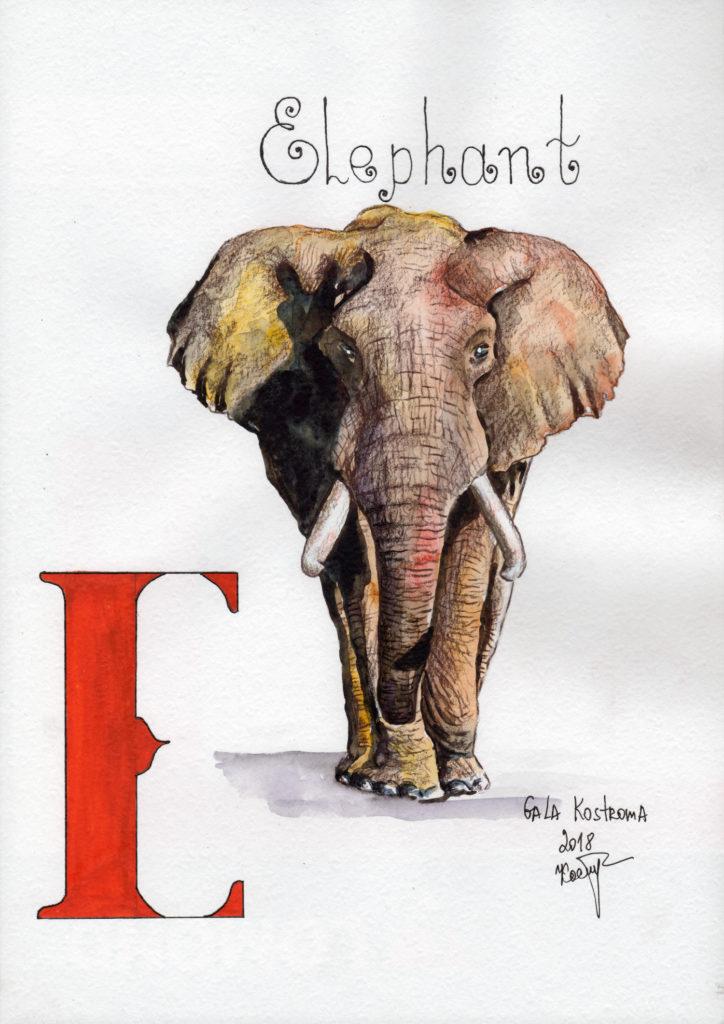 Elephant-abc