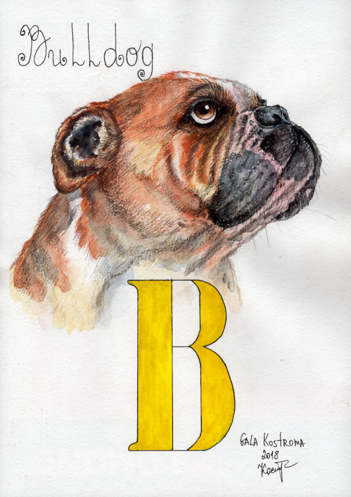 bulldog-abc