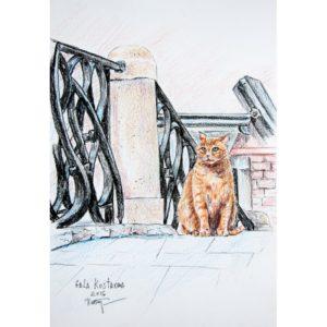 Городской кот