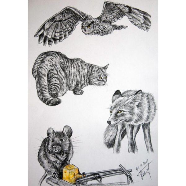 Хищники и жертва