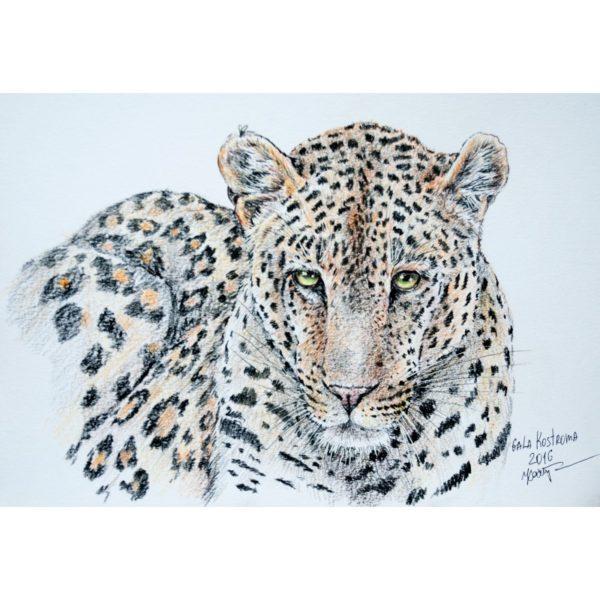 Леопард и муха