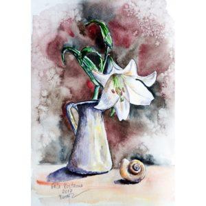 Лилия и раковина
