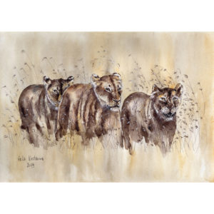 Львицы на охоте