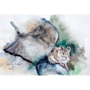 Мышонок среди камней
