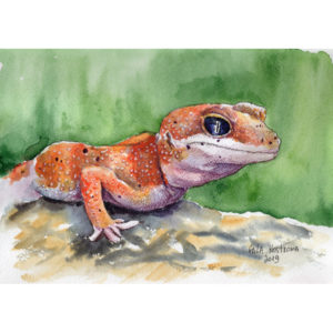Оранжевый геккон