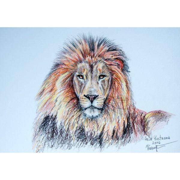 Портрет льва