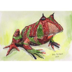 Рогатая лягушка
