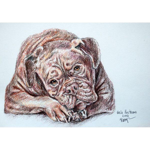 Шоколадный пес (Бордосский дог)