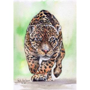 Бегущий леопард