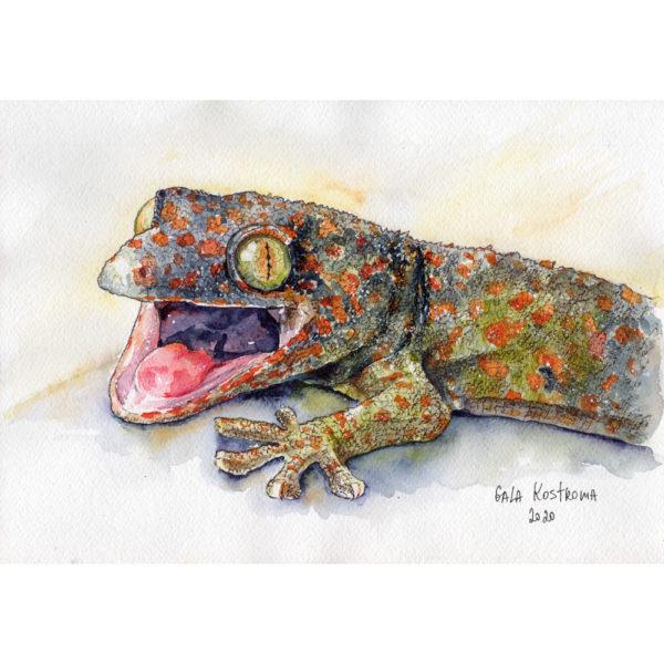 Пятнистый геккон