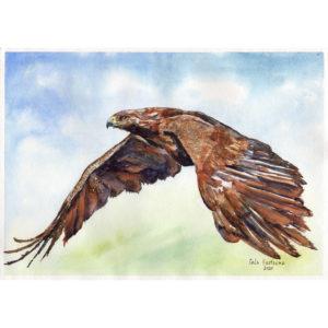 Парящий орёл акварель