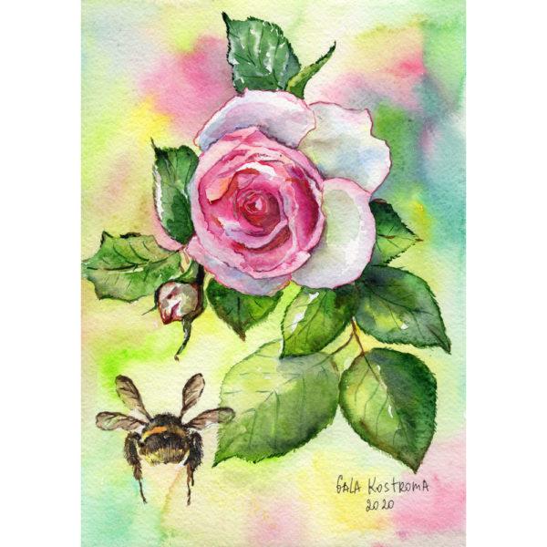 Роза и шмель акварель купить