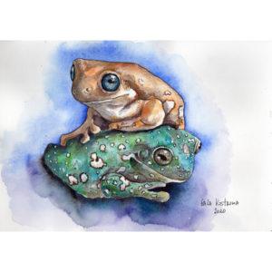 Цветные лягушки