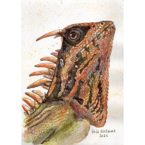Оранжево-зеленая ящерица